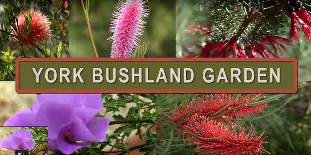 York Bushland Garden Video