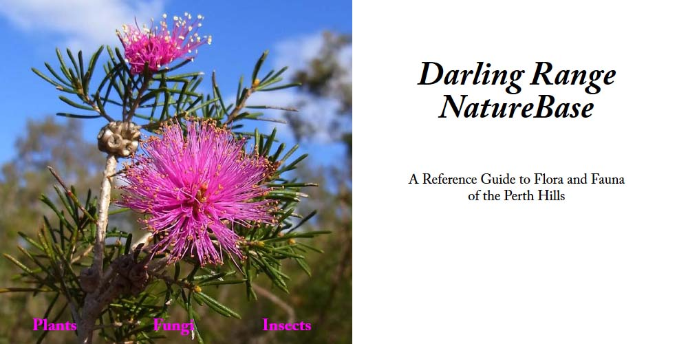 Darling Range NatureBase