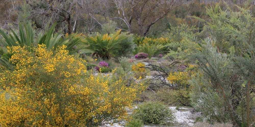 Petition to Save Perth Airport's Banksia Woodlands, wetlands and Aboriginal Heritage sites
