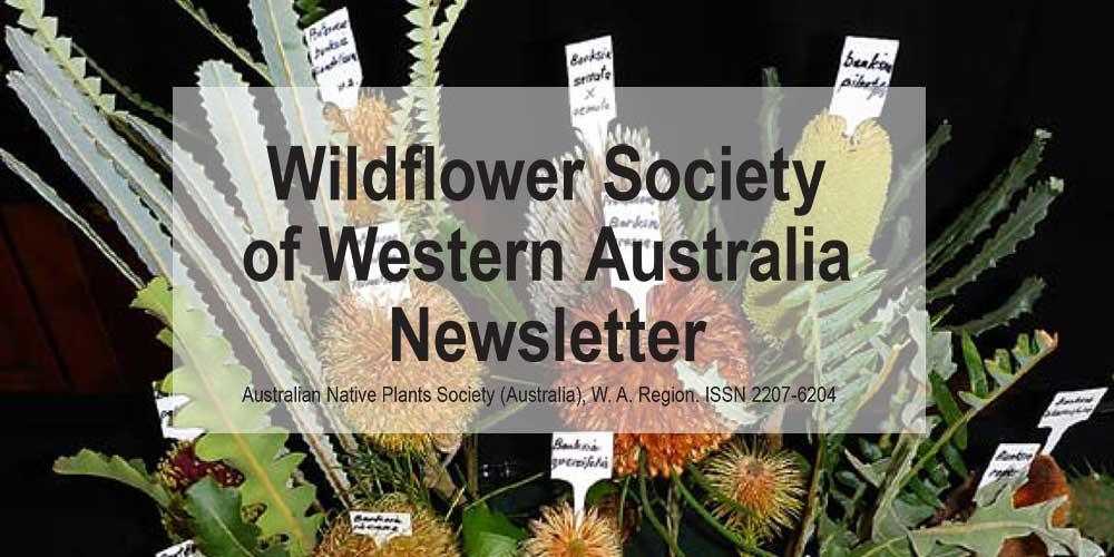 Newsletter Now Online